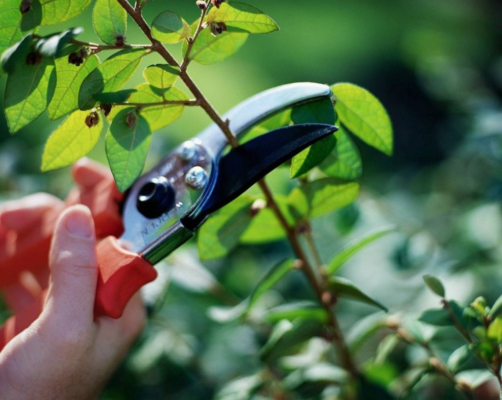 Pruning Guide Best Practices