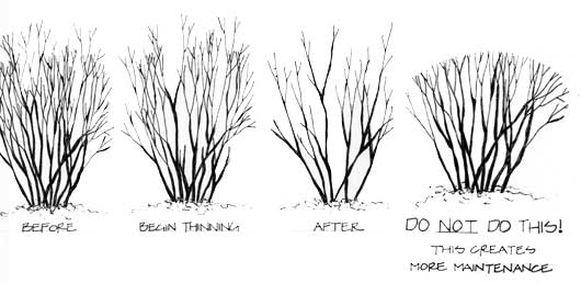 pruning guide  u2013 best practices
