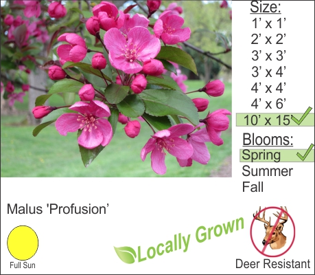 Profusion Crab Apple