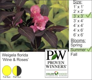 Weigela florida 'Wine and Roses'
