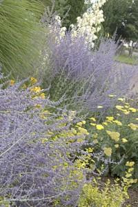 planting service, landscape design