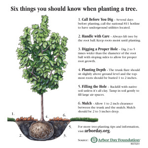 How to install a tree instructions