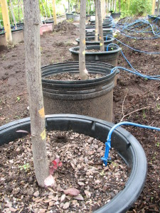 Drip Irrigation at Techmer Nursery