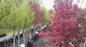 container nursery trees