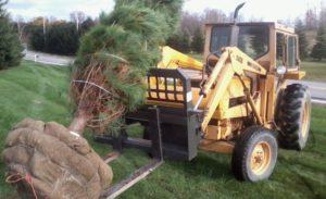 tree planting service hudson valley